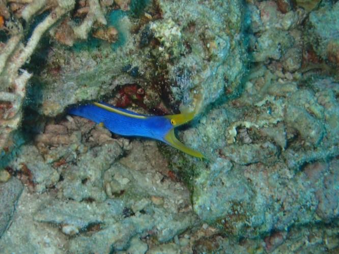 boracay eel